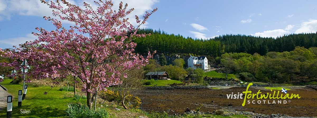 Bloosom at Salen. Copyright Visit Fort William Ltd